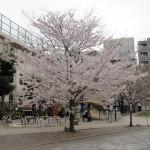 桜の季節の到来