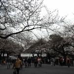 春分の日は桜巡り(上:九段下)