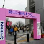 春分の日は桜巡り(下:浅草)
