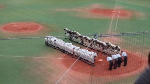 秋季東京都高等学校野球大会「二松學舍大附 − 帝京」18