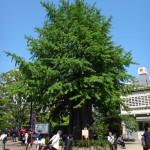 平和を求め、台東区を歩きました(2)