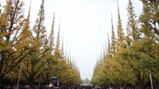 秋の雰囲気を感じた、「第19回 神宮外苑いちょう祭り」