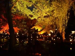 「靖国神社 秋の夜長参拝 みらいとてらす―秋を彩る九段の光―」(下)(8)