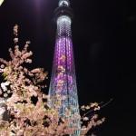 桜特別ライティングがスタート!?(下)