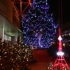今年も華やかに! 東京タワーウィンターファンタジー「オレンジ・イルミネーション」と「クリスマス・ライトダウンストーリー」
