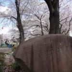 足立の桜巡りに行ってきました(中)~花畑公園~