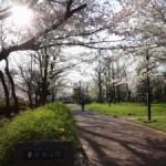 足立の桜巡りに行ってきました(下)~東綾瀬公園~