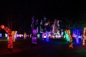 「光の祭典2016」(上)27