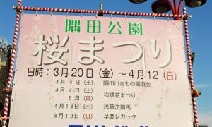 満開までもう少し、隅田公園「桜まつり」(上)