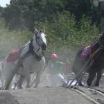迫力ある馬の演出が楽しめた! 「第47回 愛馬の日」(下)