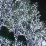 新宿イルミネーション2