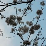 めぐろ川の桜もきれい!