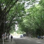 東海大学4