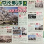 桜を見に、王子まで行ったんですが、笑(上) ~音無親水公園~